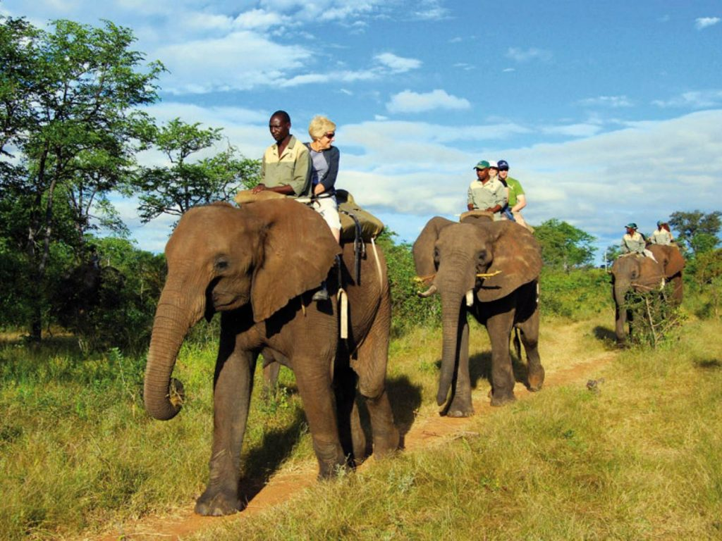 1423946500elephant_back_safari