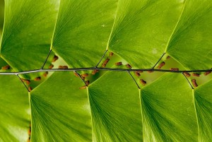 Perfect-Geometric-Patterns-In-Nature17__880