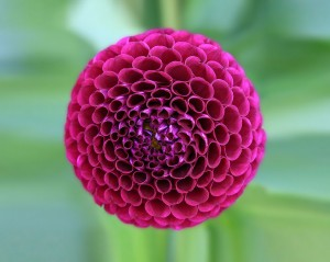 Perfect-Geometric-Patterns-In-Nature2__880