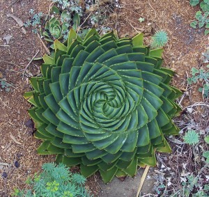 Perfect-Geometric-Patterns-In-Nature8__880